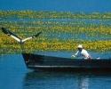 Λίμνη Κερκίνη  , πηγή ΝΕΠΟΣ
